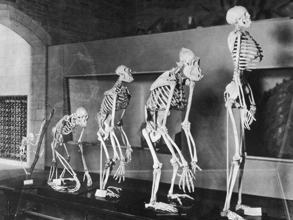 Дарвин ошибался: эволюция взялась за людей всерьез