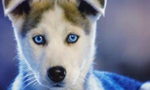 За 5 тысяч долларов карие глаза можно сделать голубыми