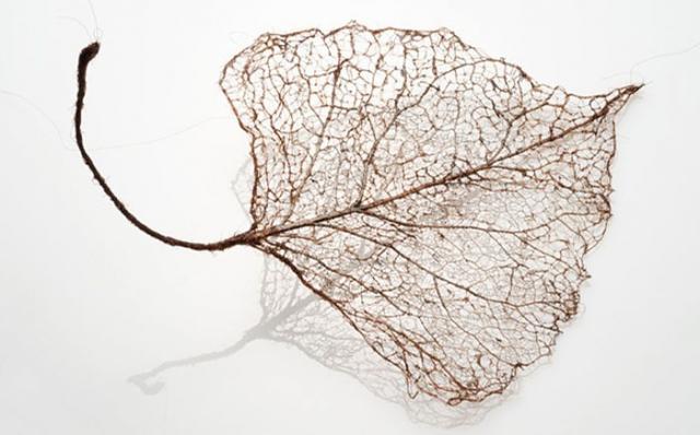 лист из волос