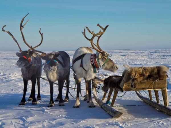 chumovie vihodniye v arktike
